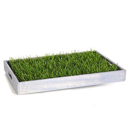 Miau Katzengras inklusive Dekotablett 'Sky Blue'   60x40cm echtes, saftiges Gras   sofort nutzbar - kein aussäen  (Sky Blue)