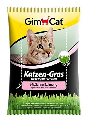 GimCat Katzen-Gras mit Schnellkeimung - Saatmischung aus kontrolliertem Feldanbau für schnelle Aufzucht - 1 Beutel (1 x 100 g)
