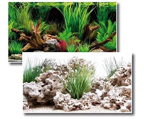 Amtra Deko Fotorückwand Wonder beidseitig Bedruckt in verschiedenen Größen 2in1 Rückwandposter Dekoration Aquarium Rückwand, Fotorückwand Wonder:100x60cm