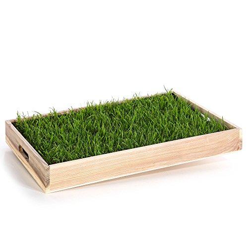 Miau Katzengras inklusive Dekotablett 'Pure Nature'   60x40cm echtes, saftiges Gras   sofort nutzbar - kein aussäen   (Pure Nature)