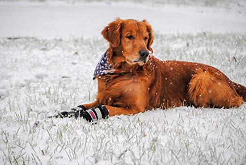 Bark Brite Alle Wetterneoprenpfotenschutz Hundeschuhe Mit Reflektierenden Straps- (Md (3.0 In.)) Reise Reißverschlussetui Enthalten