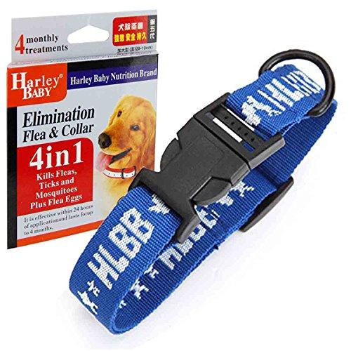 Großer Hund 4 in 1 Hundehalsbänder, Geschirr führt grundlegende Halsbänder