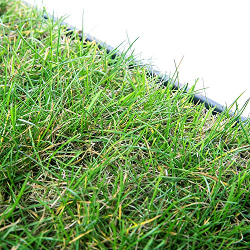pille gartenwelt Katzengras Katzenwiese Hundewiese echter Rasen ca 60x40 cm inkl Kunststoffschale